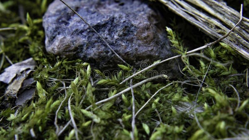Малый камень окруженный мхом стоковые изображения rf