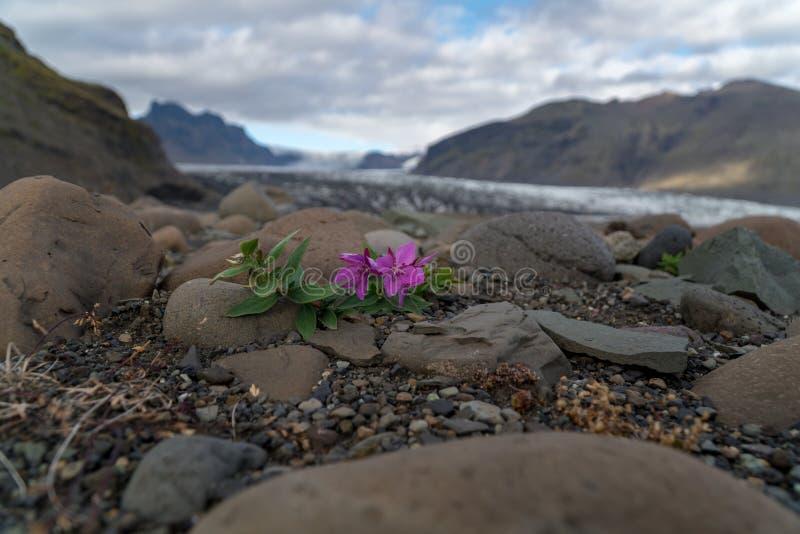 Малый красочный цветок растет на грубой поверхности стоковое изображение