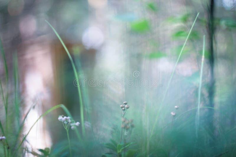 Малый мир - природа стоковое изображение rf
