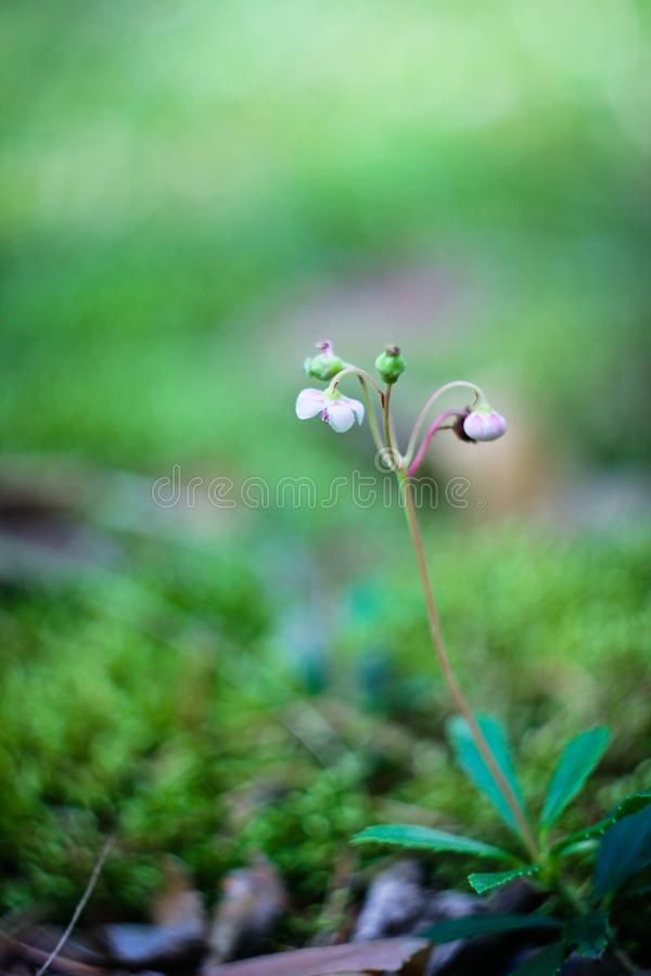 Малый мир - природа стоковое фото rf