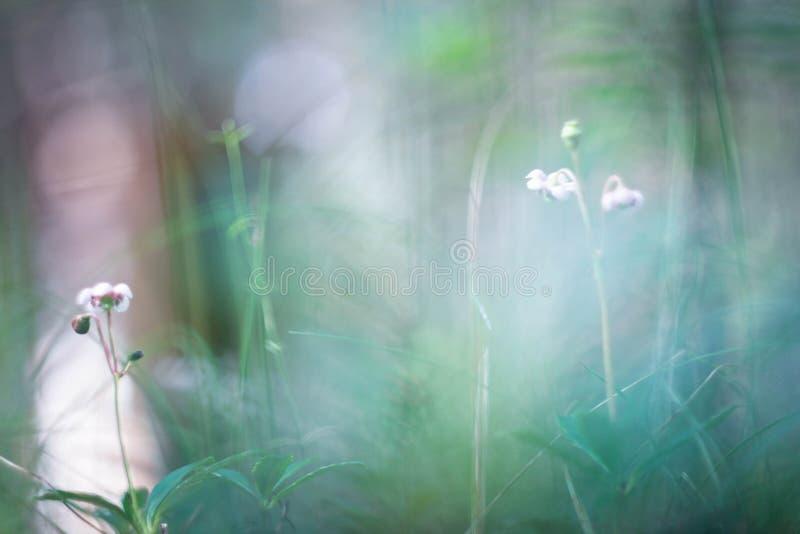 Малый мир - природа стоковые фотографии rf