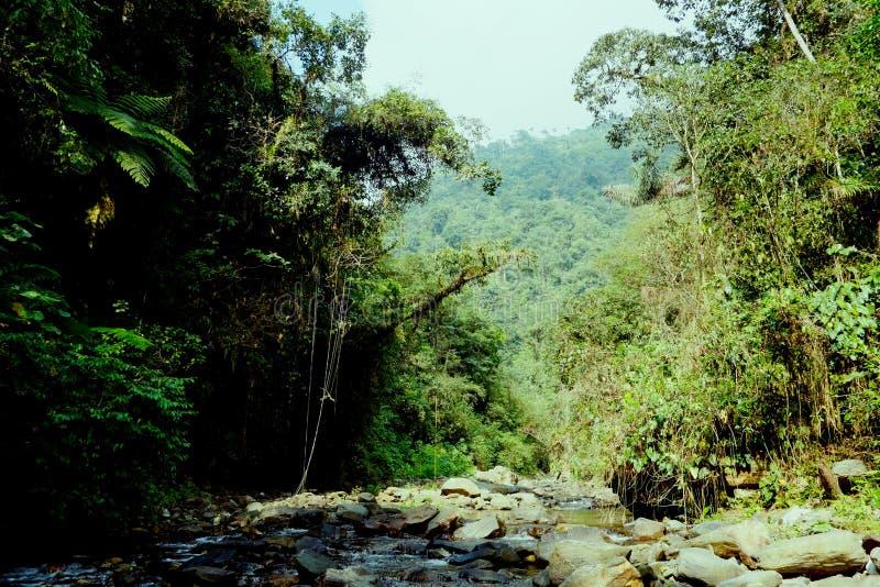 Малый поток воды пропуская вокруг утесов внутри местности джунглей стоковые изображения