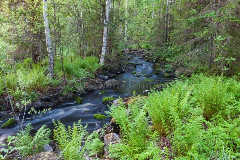 Малый поток в лесе стоковые изображения