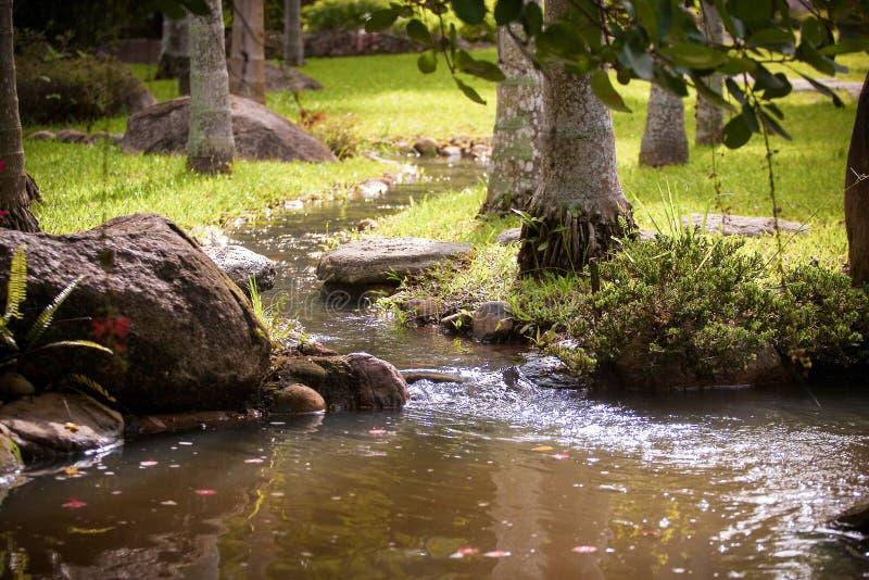 Малый поток в саде стоковое фото