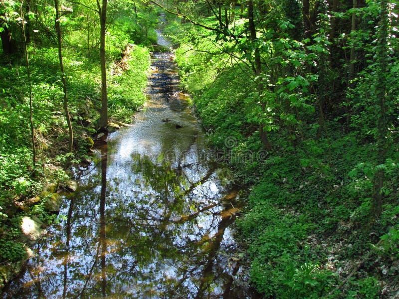 Малый поток горы в лесе, загоренном солнцем после полудня, отражение деревьев на поверхности воды стоковые фото
