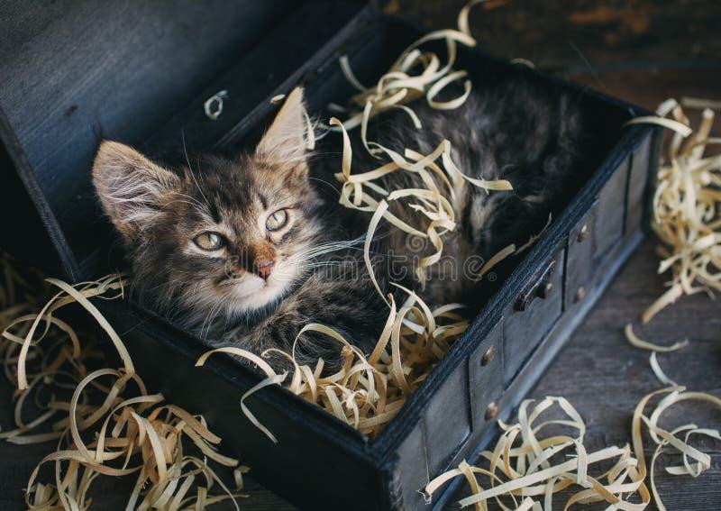 Малый, пушистый котенок лежа в коробке стоковое фото rf