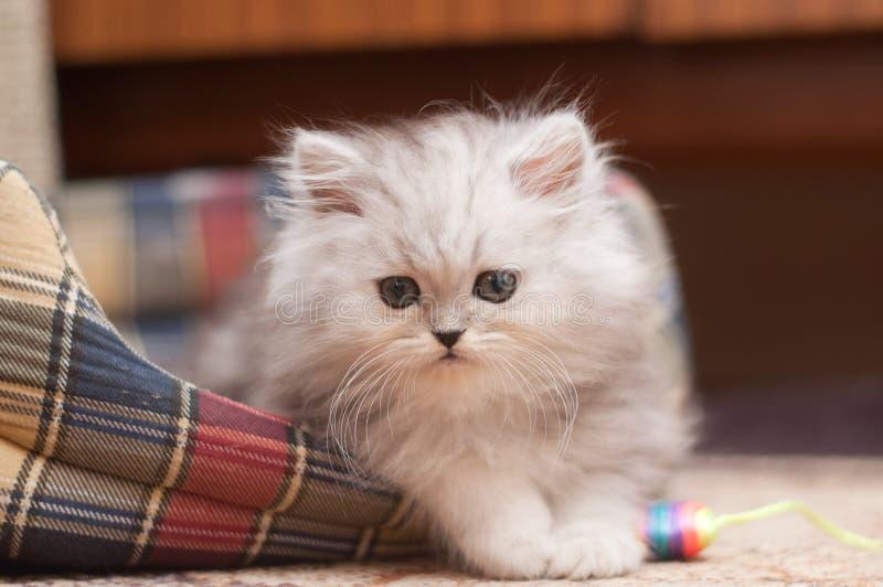 Малый пушистый котенок   стоковые фото