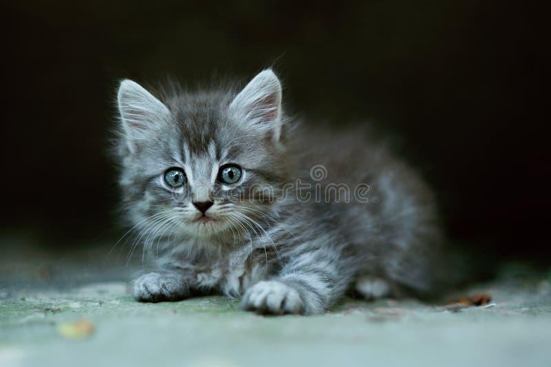 малый славный пушистый котенок стоковое изображение rf