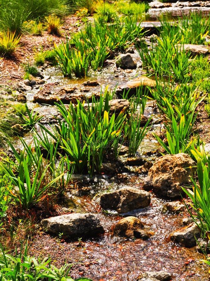 Малый травянистый поток в Мексике стоковые фото