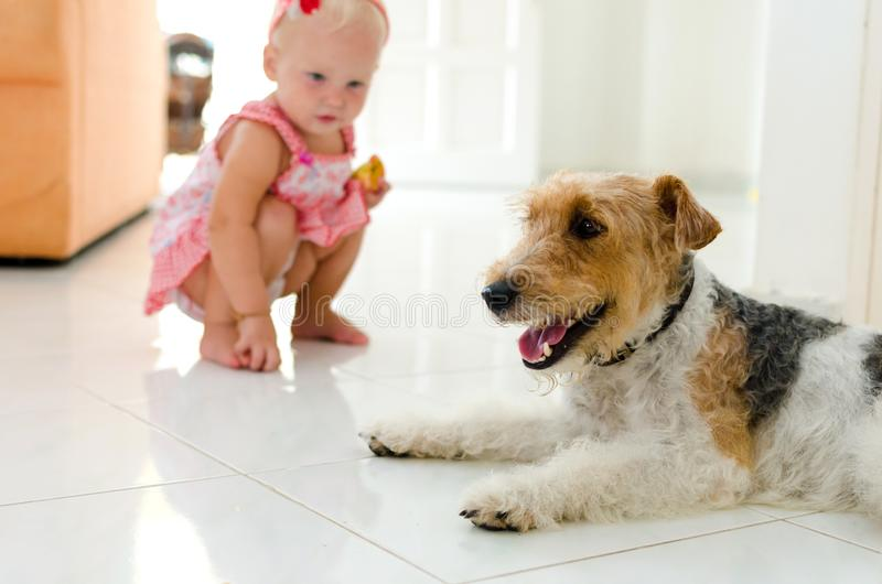 Малыш и собака Маленькая девочка и ее любимчик стоковое фото