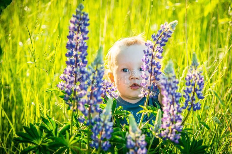 Малыш ребенк в одичалый прятать луга стоковые изображения rf