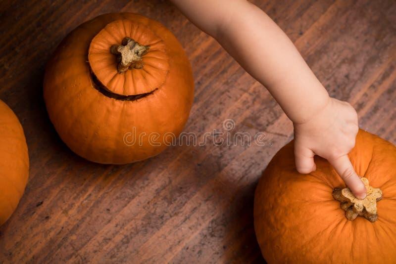 Малыш указывая на тыкву стоковые фотографии rf