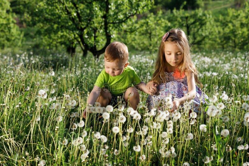 Мальчика девушки поля одуванчика желтый цвет луга зеленого цвета младенца белого счастливый маленький цветет отвар сестры семьи с стоковое фото