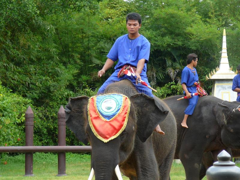 Мальчики в тайских старых костюмах ехать слоны стоковые изображения rf