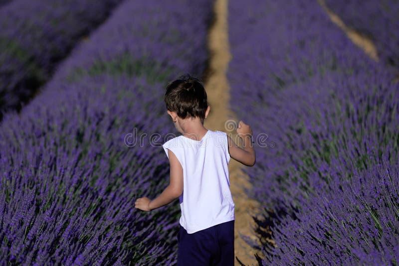 Мальчик в лаванде стоковое изображение rf