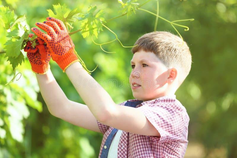 Мальчик держа ветвь виноградины стоковые фото