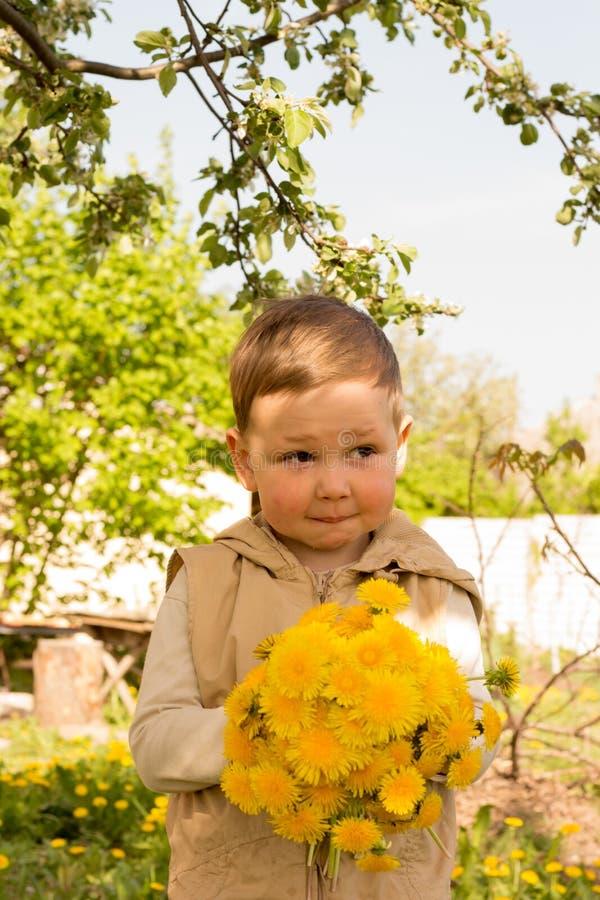 Мальчик держит большой букет желтых одуванчиков, застенчивый, гримасничая, подарок к его матери стоковая фотография