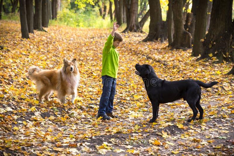 Мальчик играя с 2 собаками на лесе осени стоковая фотография