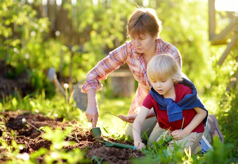 Мальчик и женщина засаживая семя на кроватях на задворк Хелпер мамы маленький стоковые изображения rf