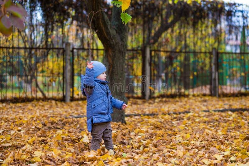 Мальчик маленького ребенка 1 лет прогулок на упаденных красочных листьях стоковое изображение