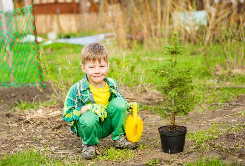 Мальчик моча засаженное дерево стоковое фото