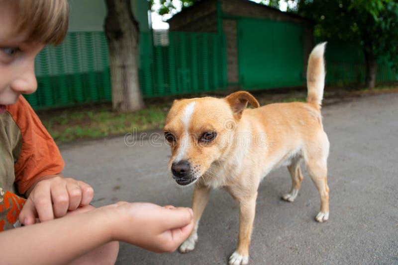 Мальчик обнимает маленькую собаку и кормит ее с его оружий, концепции приятельства и доверия стоковые фотографии rf