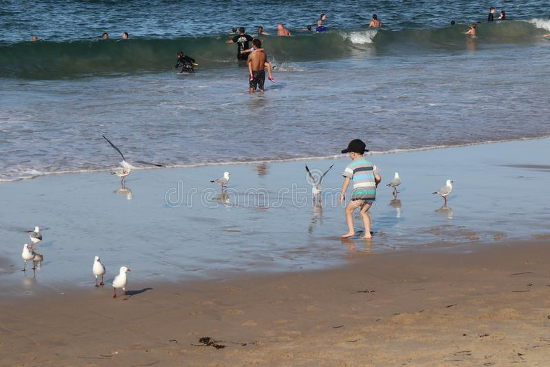 Мальчик пляжа- Cronulla сыграл с чайками стоковое изображение