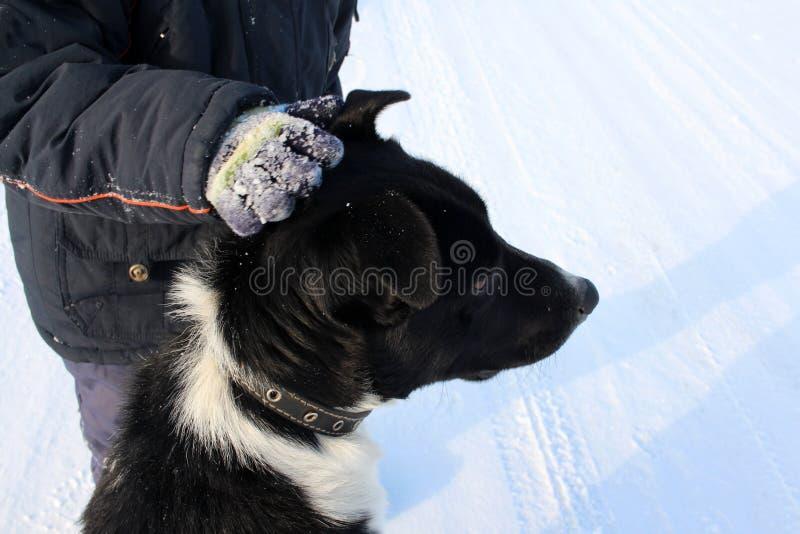 Мальчик рука штрихуя большую черную собаку на улице в зиме храбрый реб стоковое фото
