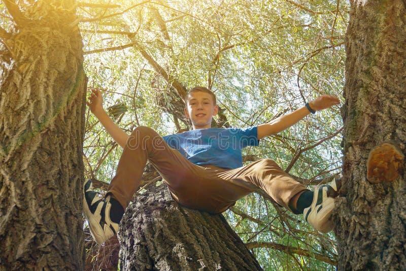 Мальчик сидит на дереве, на широко угольной фотографии стоковые изображения rf