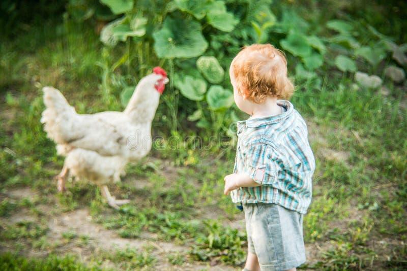 Мальчик смотря к цыпленку стоковая фотография