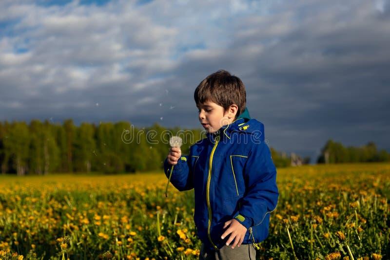 Мальчик с одуванчиком на летний день стоковое фото