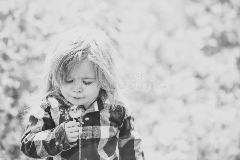 Мальчик с цветком на идилличный солнечный день стоковые изображения