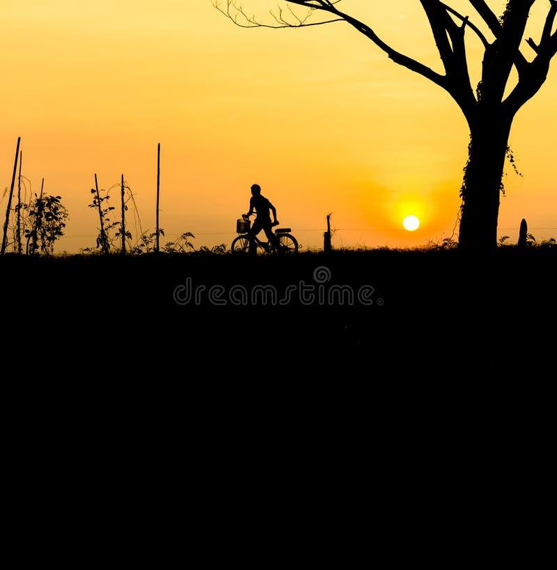 Мамы силуэта с велосипедом в саде стоковые фотографии rf
