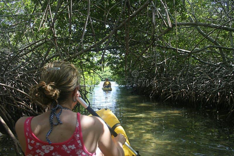 мангрова пущи kayaking стоковое изображение rf