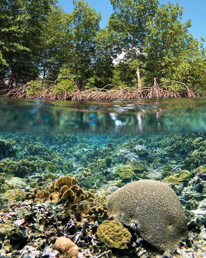мангрова экосистемы стоковые изображения