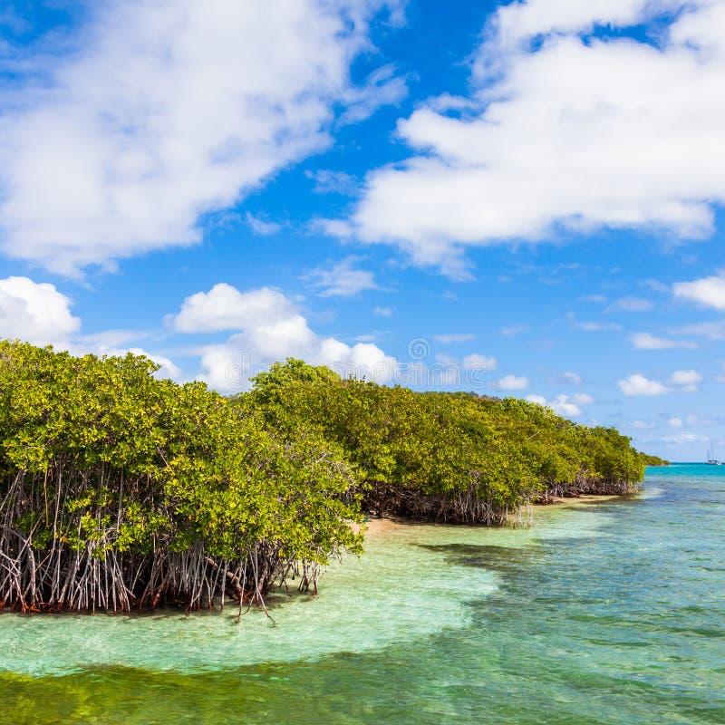 Мангрова reforest стоковые изображения
