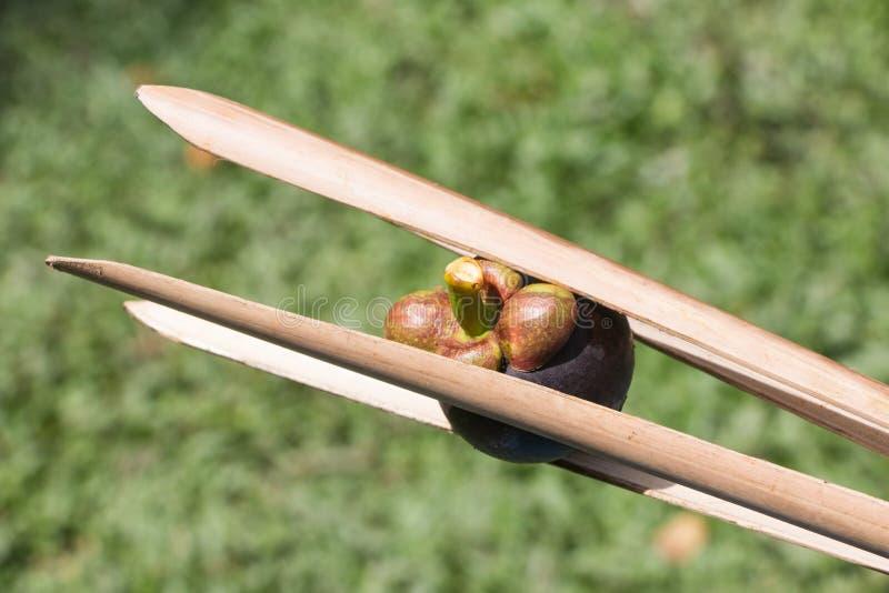 Мангустан стоковое изображение