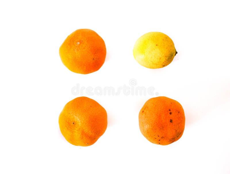 3 мандарина и один лимон на белой предпосылке стоковая фотография rf