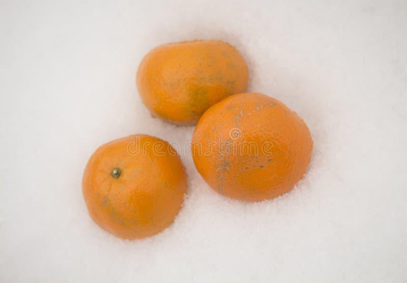 3 мандарина стоковая фотография
