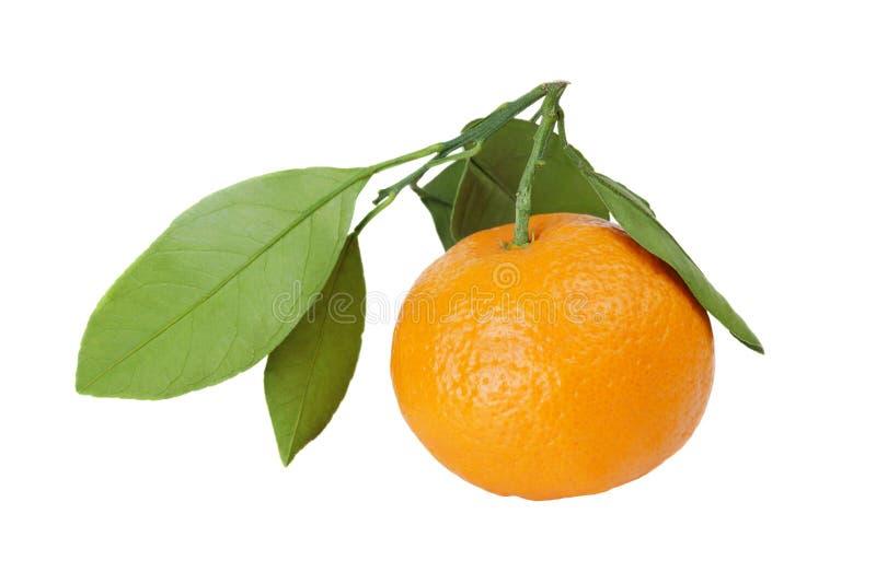 Мандарин (tangerine) на белой предпосылке стоковое фото