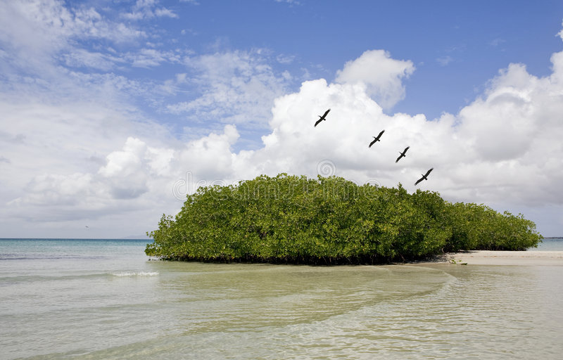 маргарита de isla стоковое фото