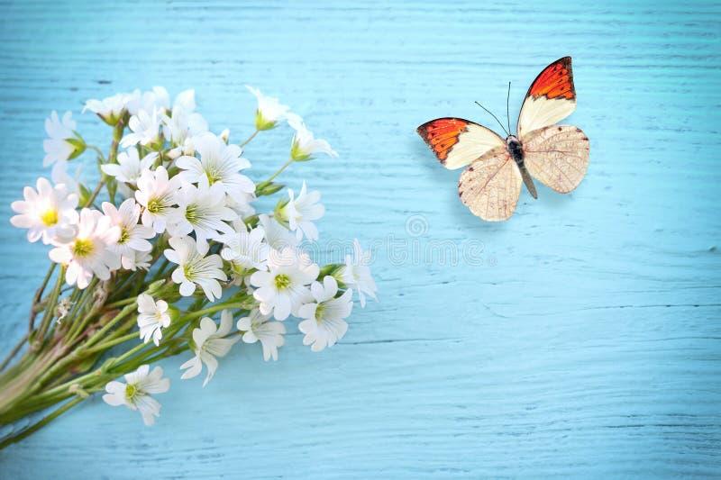 Маргаритка бабочки и цветка на деревянной предпосылке стоковое фото