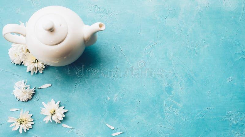 Маргаритка чайника травяного чая цветет голубая предпосылка стоковые изображения
