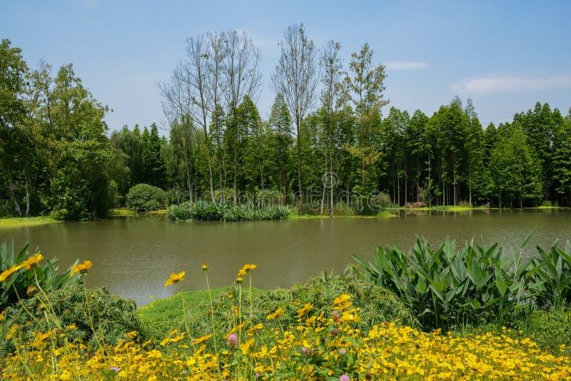 Маргаритки берега реки цветя в солнечном после полудня лета стоковая фотография