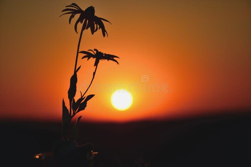 Маргаритки и восход солнца в поле стоковое фото
