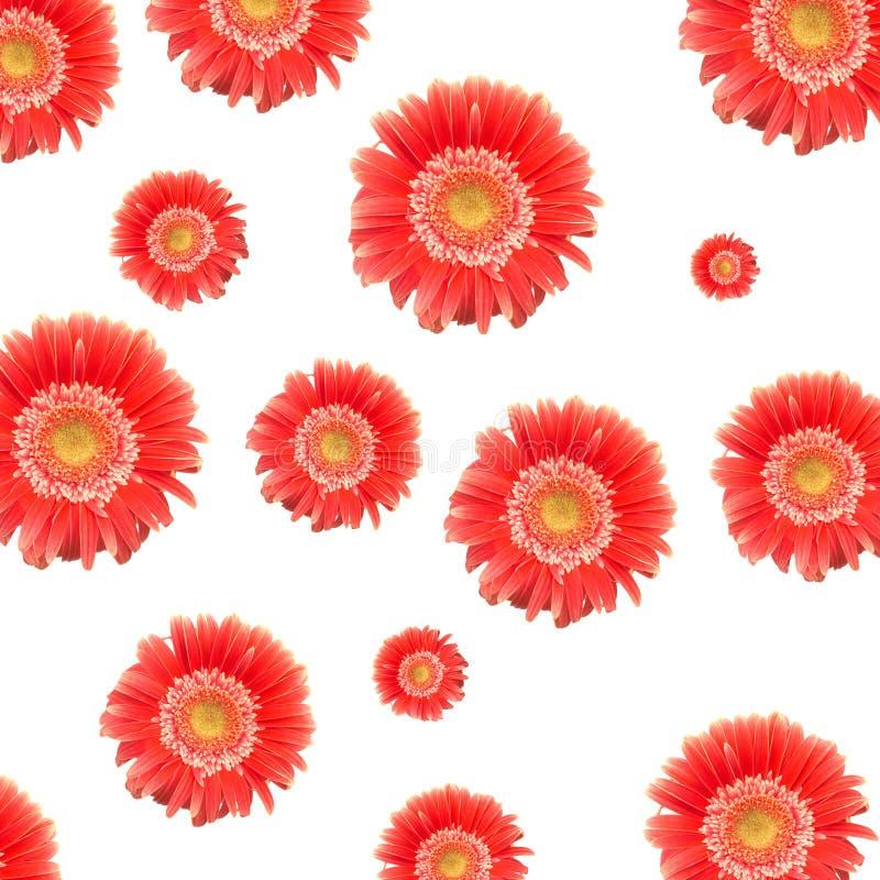 маргаритки красные стоковое изображение rf