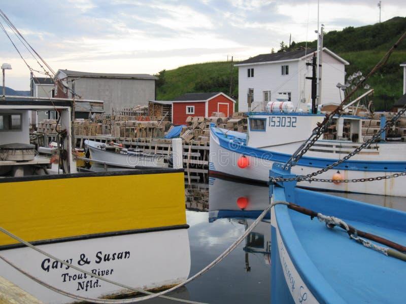 Марина Ньюфаундленда стоковые изображения rf