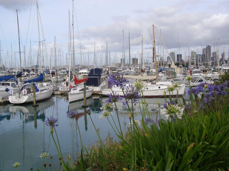 Марина Окленд Новая Зеландия Westhaven стоковое фото rf