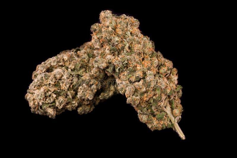 марихуана медицинская стоковое изображение rf