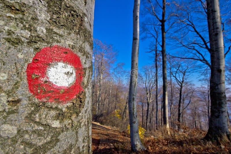 Маркировка пути тропы леса стоковое изображение rf